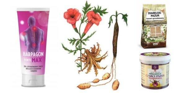 czarci pazur i jego przeciwbólowe właściwości lecznicze