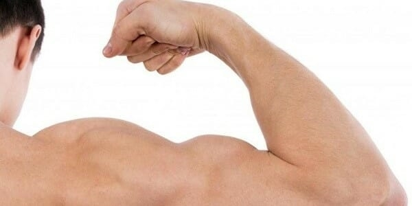co to są mięśnie
